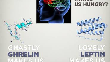 HOW TO BOOST YOUR LEPTIN LEVELS